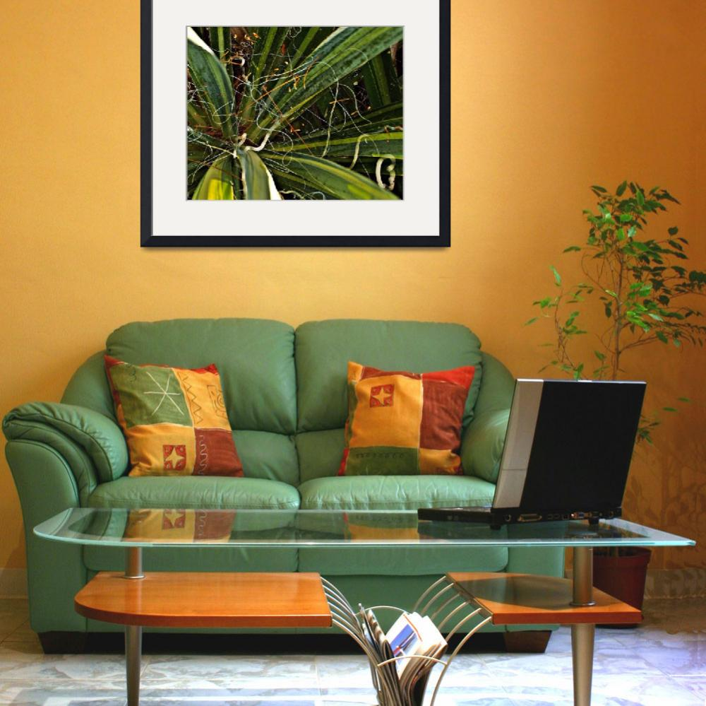 """Yucca Plant Chaos&quot  (2010) by bavosiphotoart"