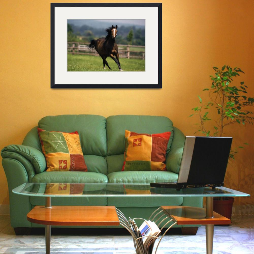 """Thoroughbred Horses, Yearlings&quot  by DesignPics"