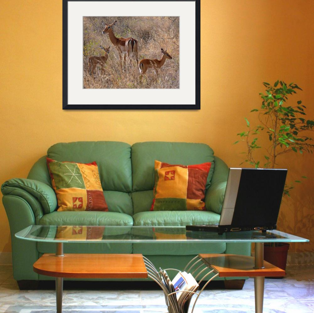 """Impala Mother with Fawns&quot  (2007) by stockphotos"