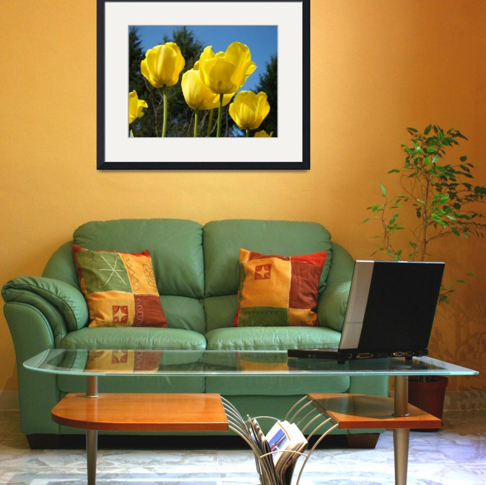 """Tulips Bright Yellow&quot  (2011) by BasleeTroutman"