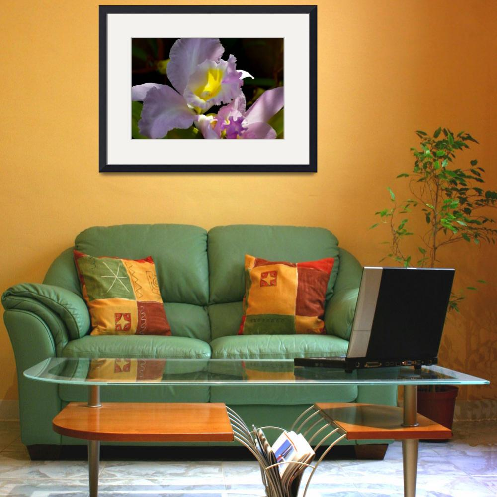 """Delicate Orchid&quot  (2008) by DigiPix"