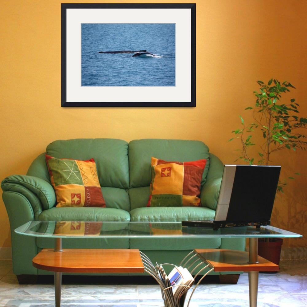 """NaP_ Whale Watching004&quot  by nevilleprosser"