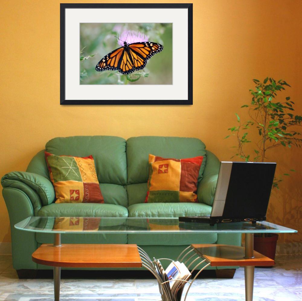 """Monarch Butterfly&quot  (2008) by NaturesGreat"