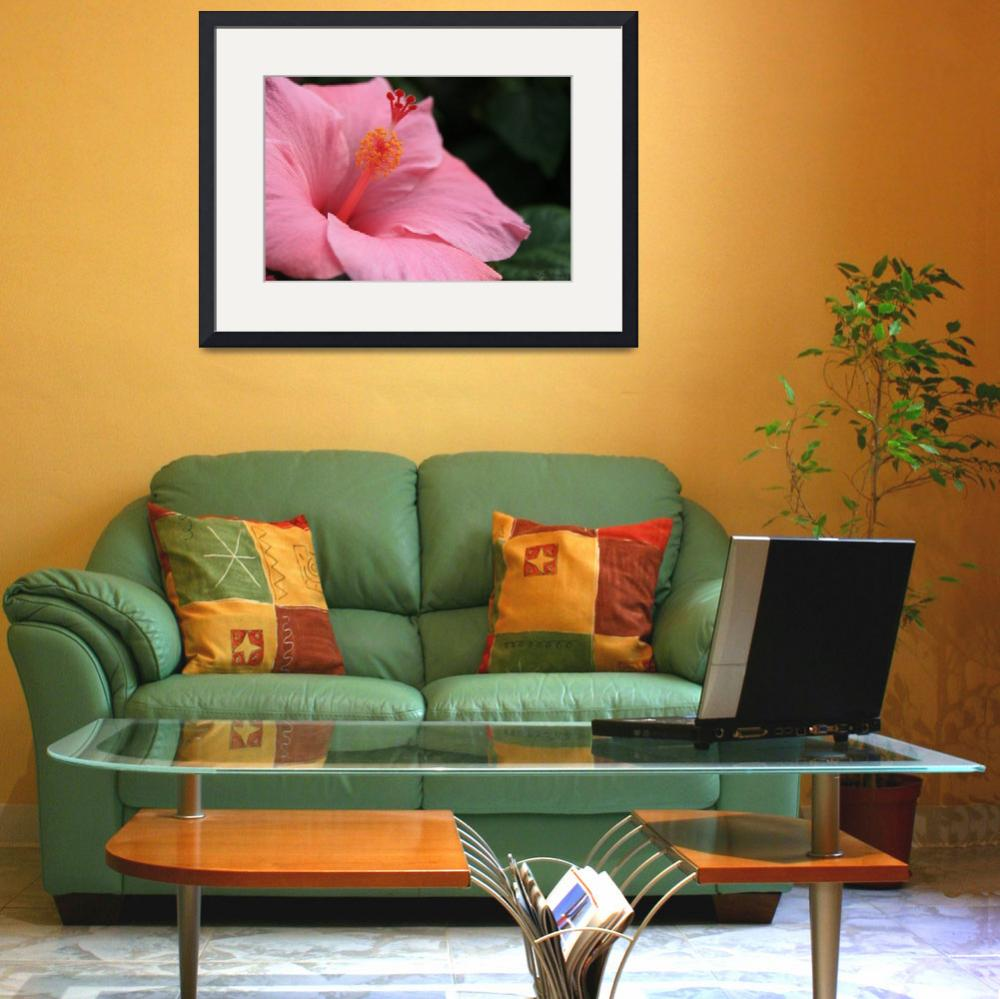 """pink hibiscus&quot  (2009) by JSphotography"