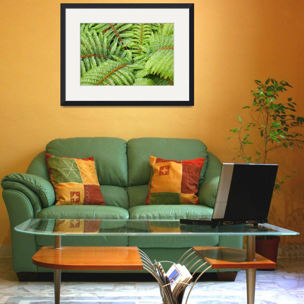 """Ferns Fronds Leaves Art Prints Forest Fern&quot  (2014) by BasleeTroutman"