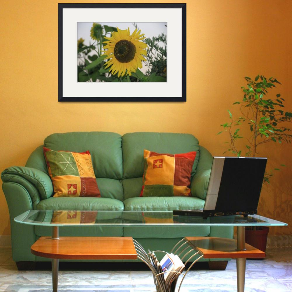 """Sunflower Italy&quot  (2013) by easyfigure"