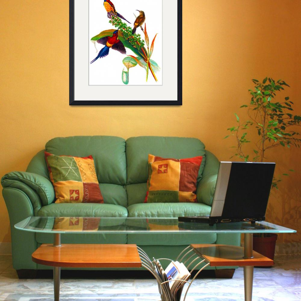 """Goulds Sunbird (Aethopyga gouldiae),&quot  (2009) by markkumurto"
