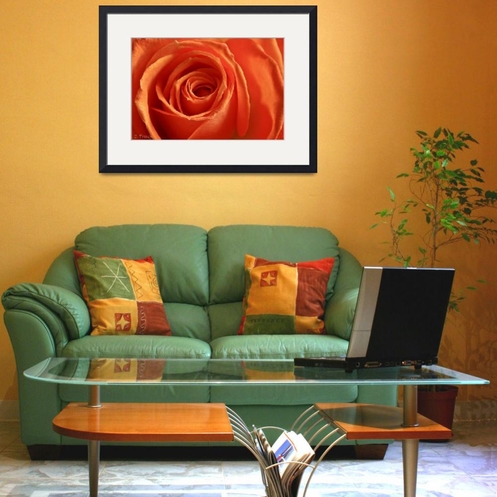 """Tangerine Rose&quot  (2012) by Tracy2912"
