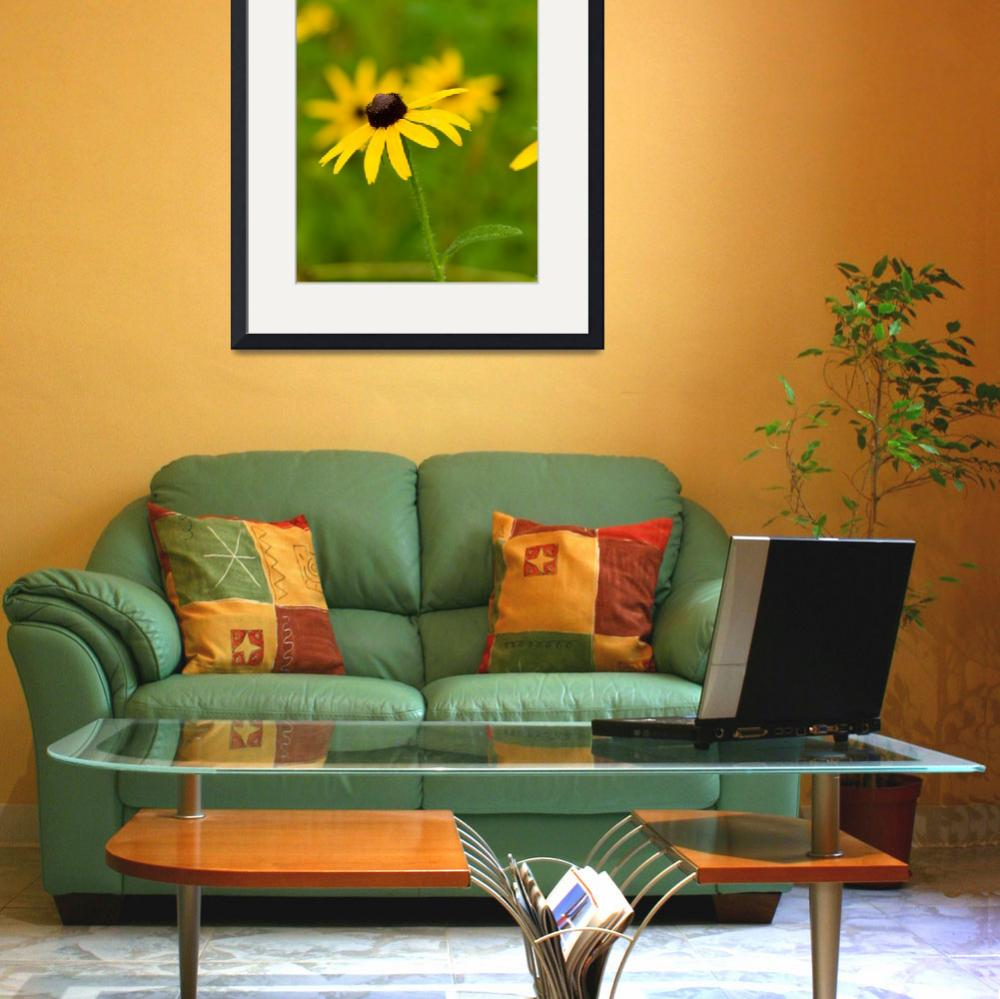 """Lovely Black-eyed Susan&quot  by tricia"