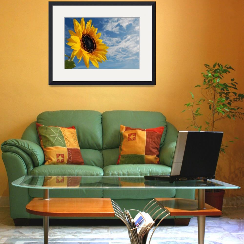 """Sunflower & sky&quot  (2009) by Paul_Rumsey"