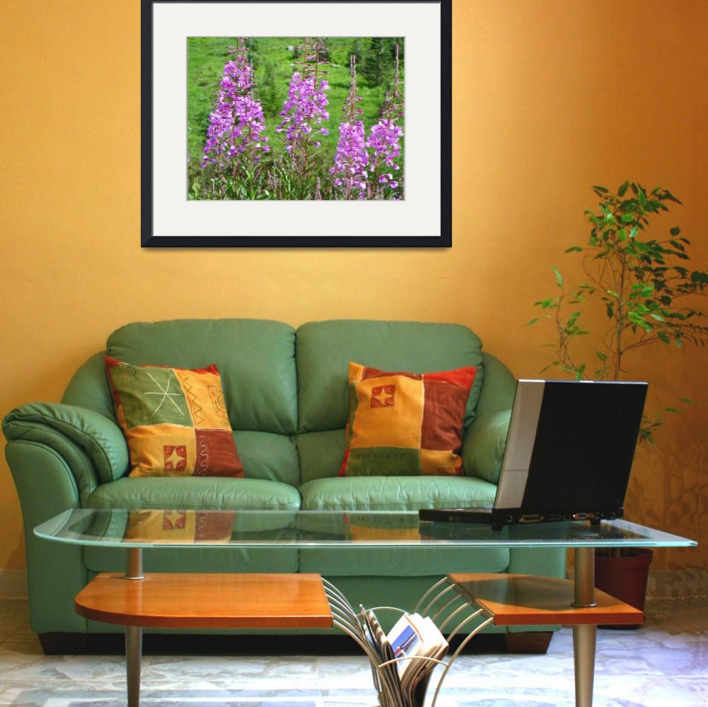 """Alpine Fireweed - Mount Rainier National Park&quot  by artsandi"