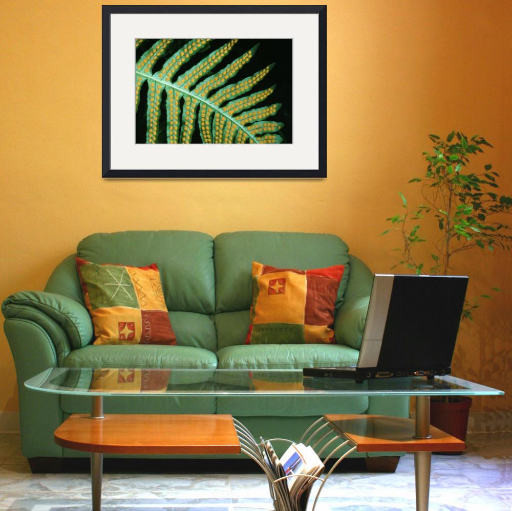 """Sword Fern Leaf (Polystichum Munitum)&quot  by Panoramic_Images"