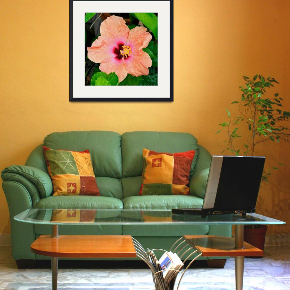 """Orange Hibiscus flower&quot  (2010) by ImageArt-Photography"