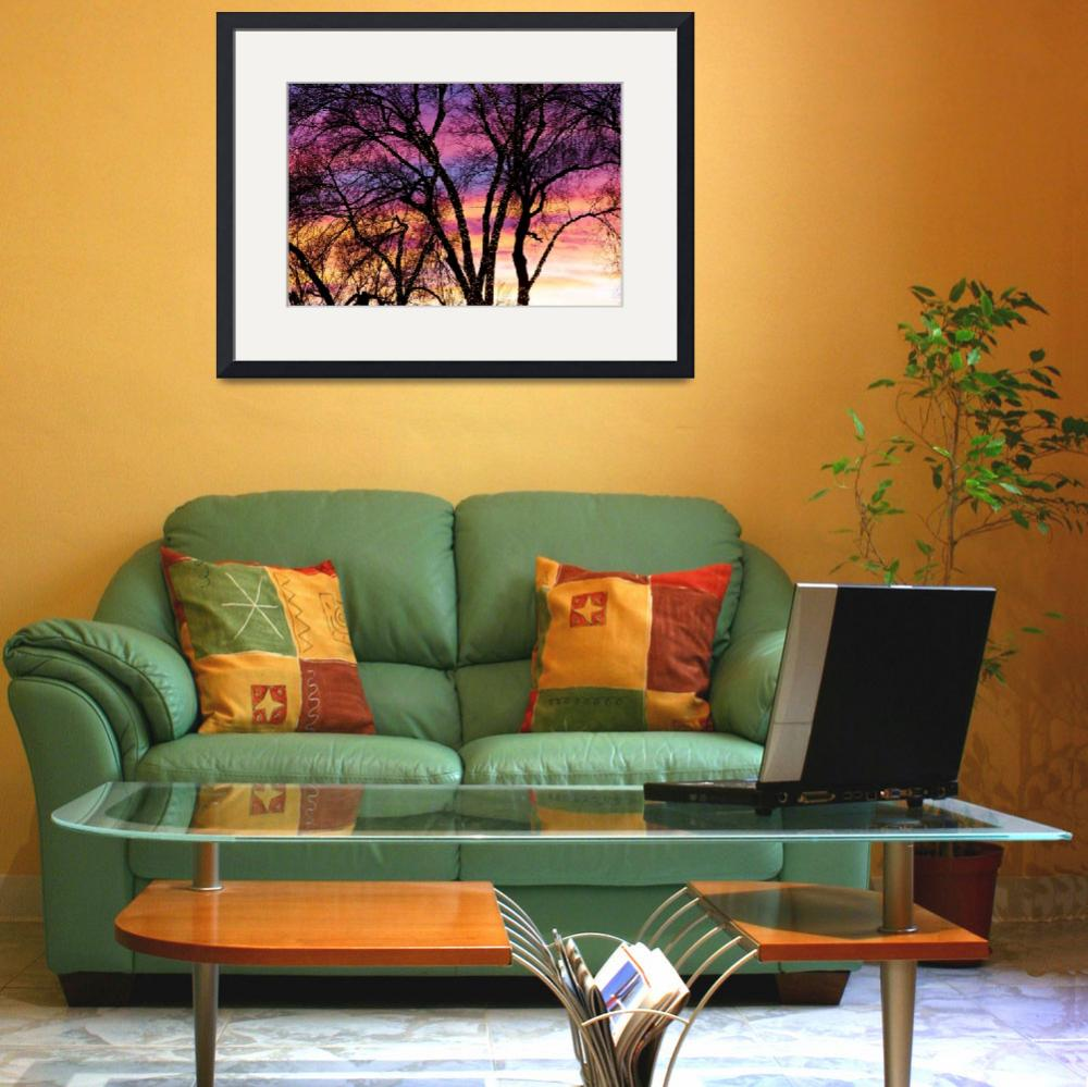 """Colorful Silhouetted Trees 31&quot  (2012) by lightningman"