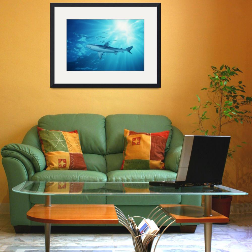 """Hawaii, Galapagos Shark With Sunburst In Backgroun&quot  by DesignPics"