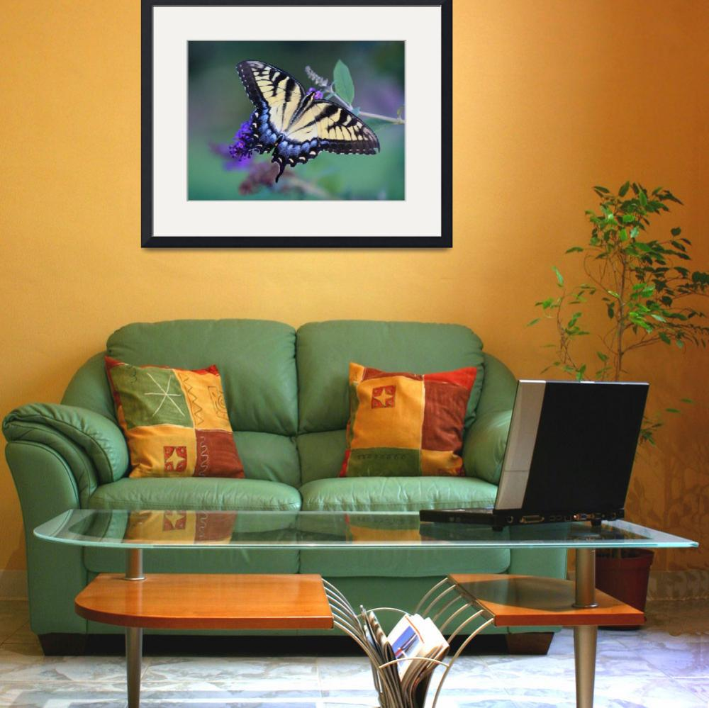 """Eastern Tiger Swallowtail Butterfly&quot  (2013) by KsWorldArt"