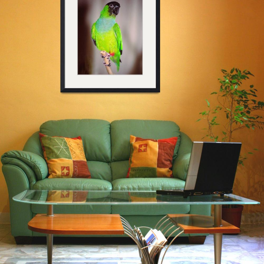 """Nanday Conure&quot  (2007) by buffaloworks"