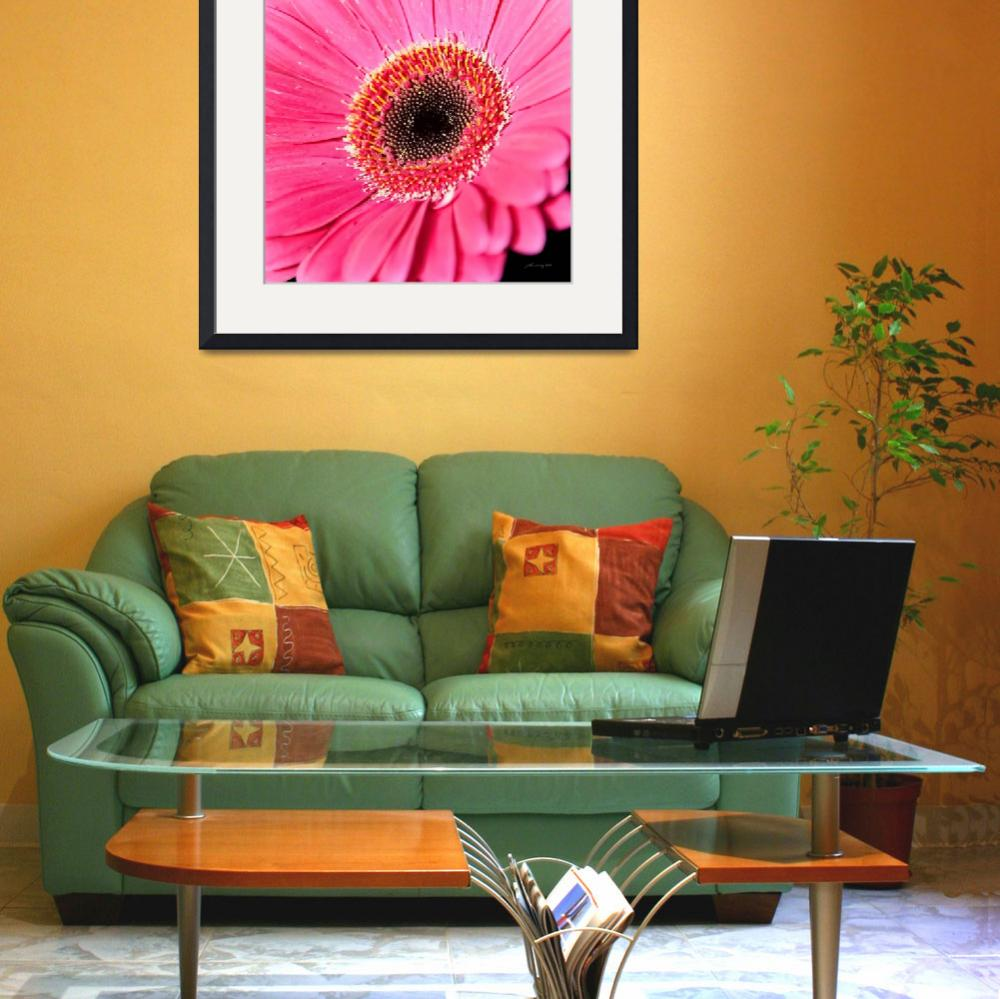 """Pink Gerbera Daisy&quot  (2010) by johncorney"