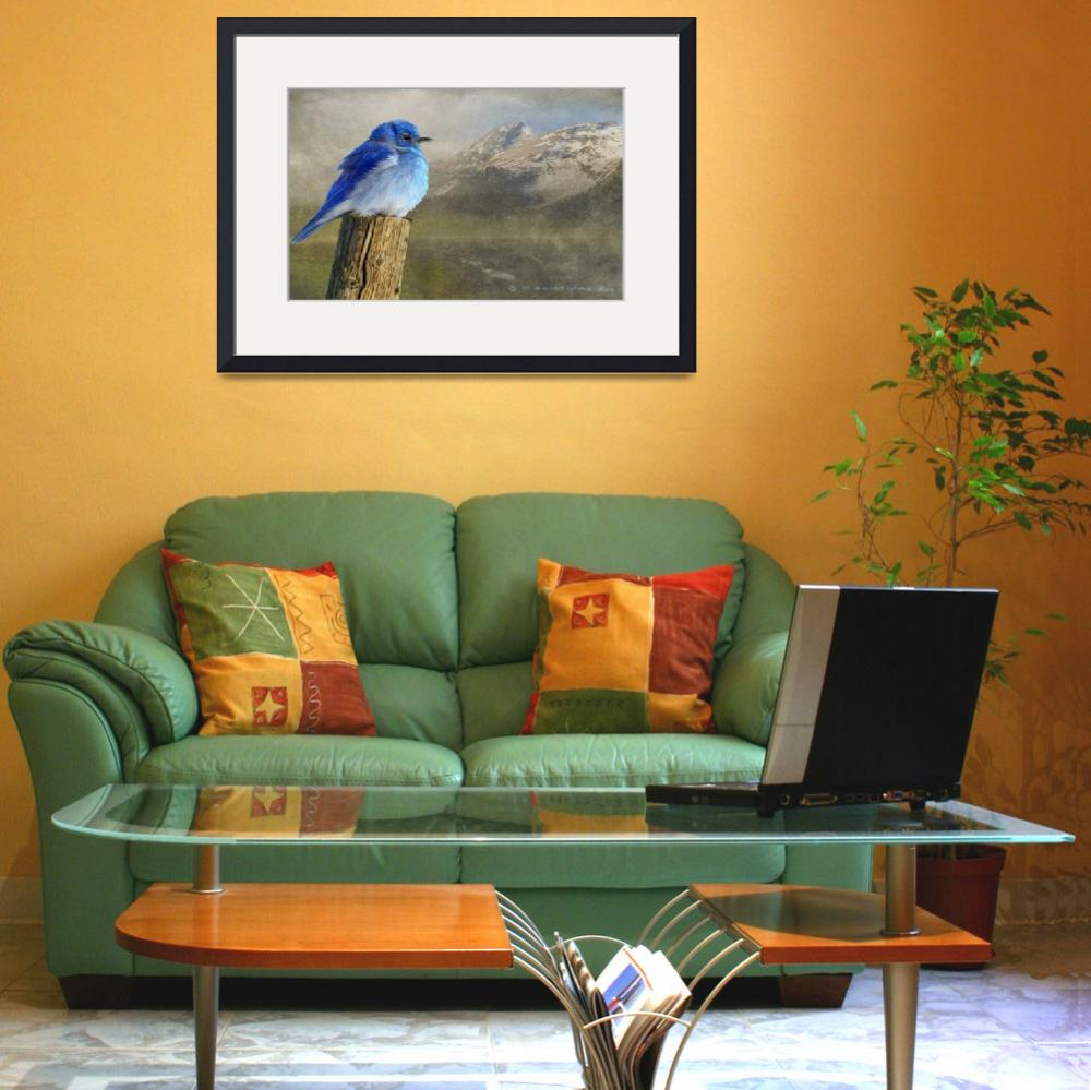 """early spring chill / mountain bluebird&quot  (2010) by rchristophervest"