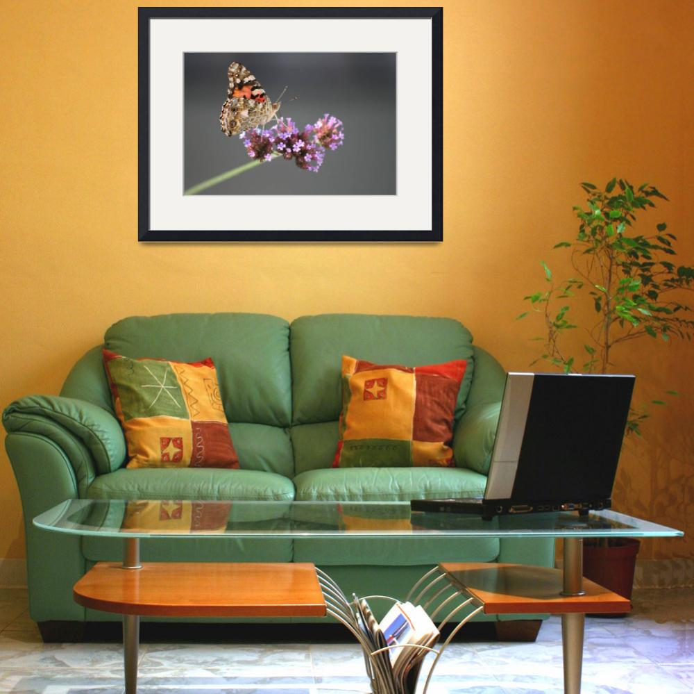 """Butterfly  American Painted lady&quot  (2010) by KsWorldArt"