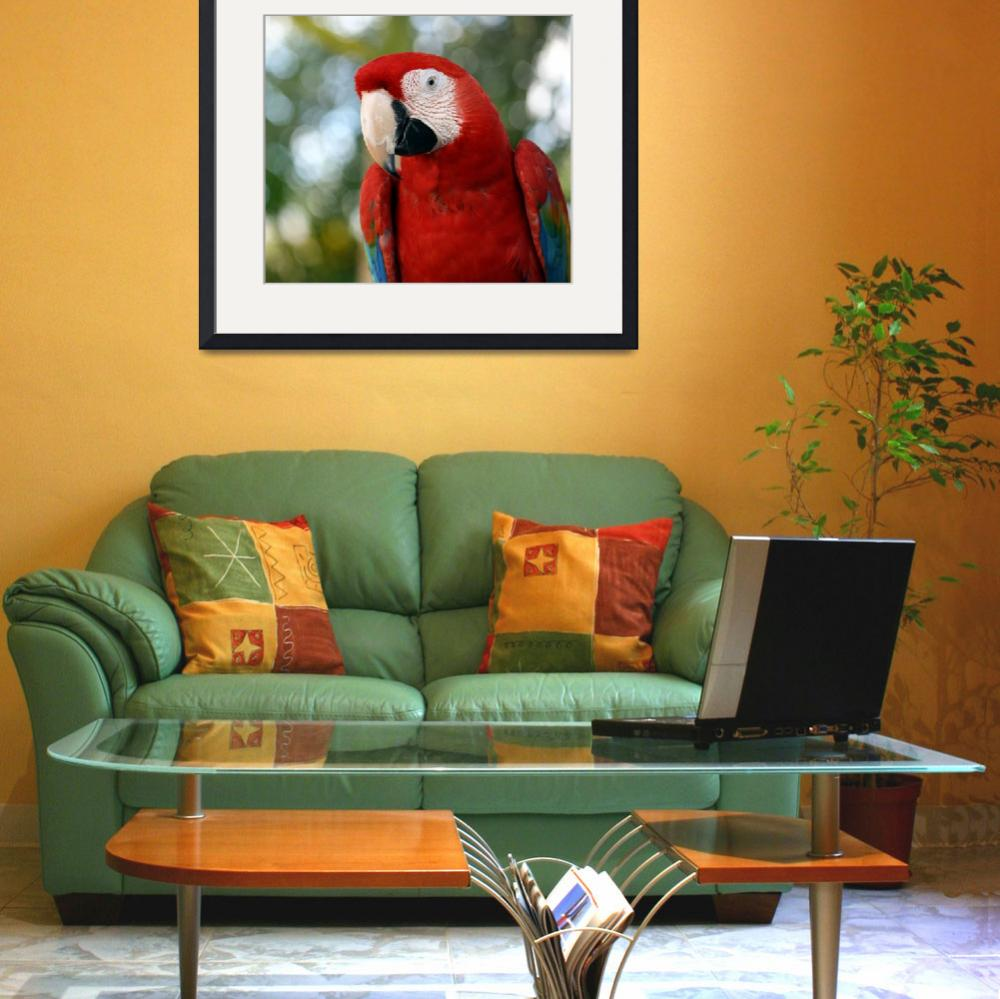 """Red Macaw&quot  (2010) by Juany"