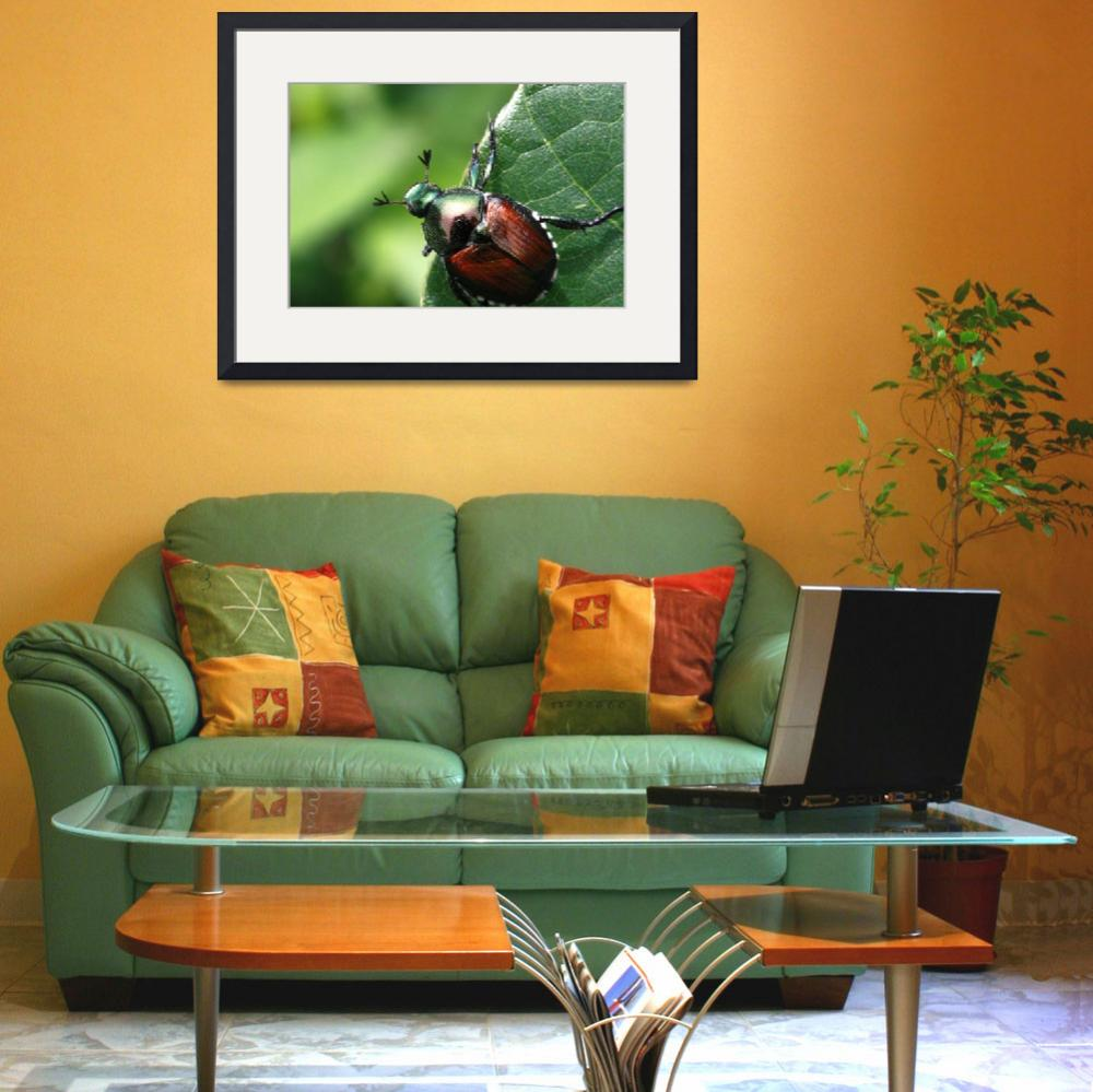 """Suwanee 06/18/09 Japanese Beetle&quot  by BrianCMcDonald"