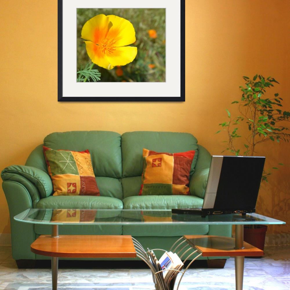"""Yellow and Orange Poppy&quot  (2011) by PatriciaSanders"