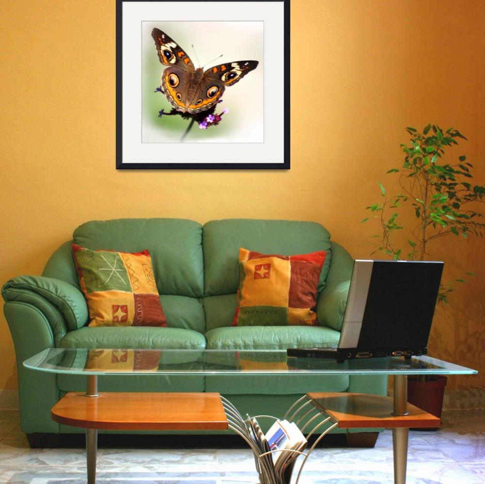 """Common Buckeye Butterfly White Vignette Square&quot  (2014) by KsWorldArt"