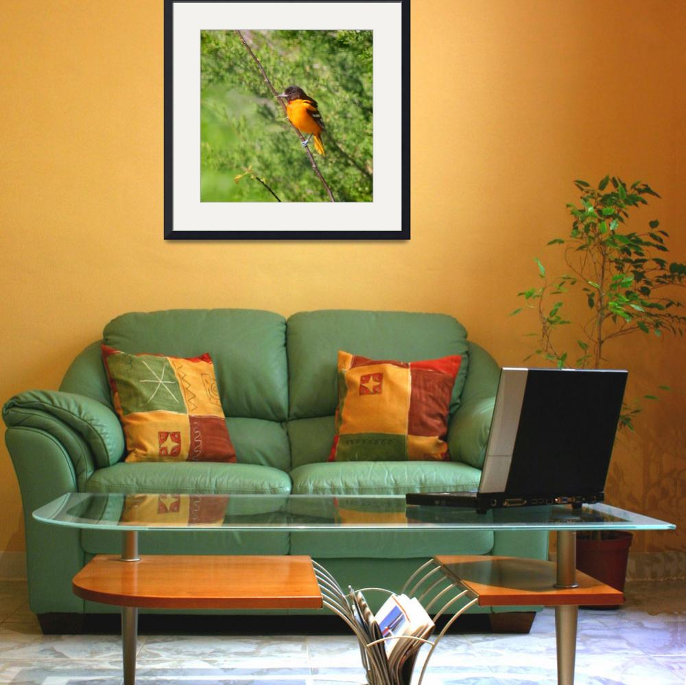 """Baltimore Oriole on Tree Branch Square Format&quot  (2013) by KsWorldArt"