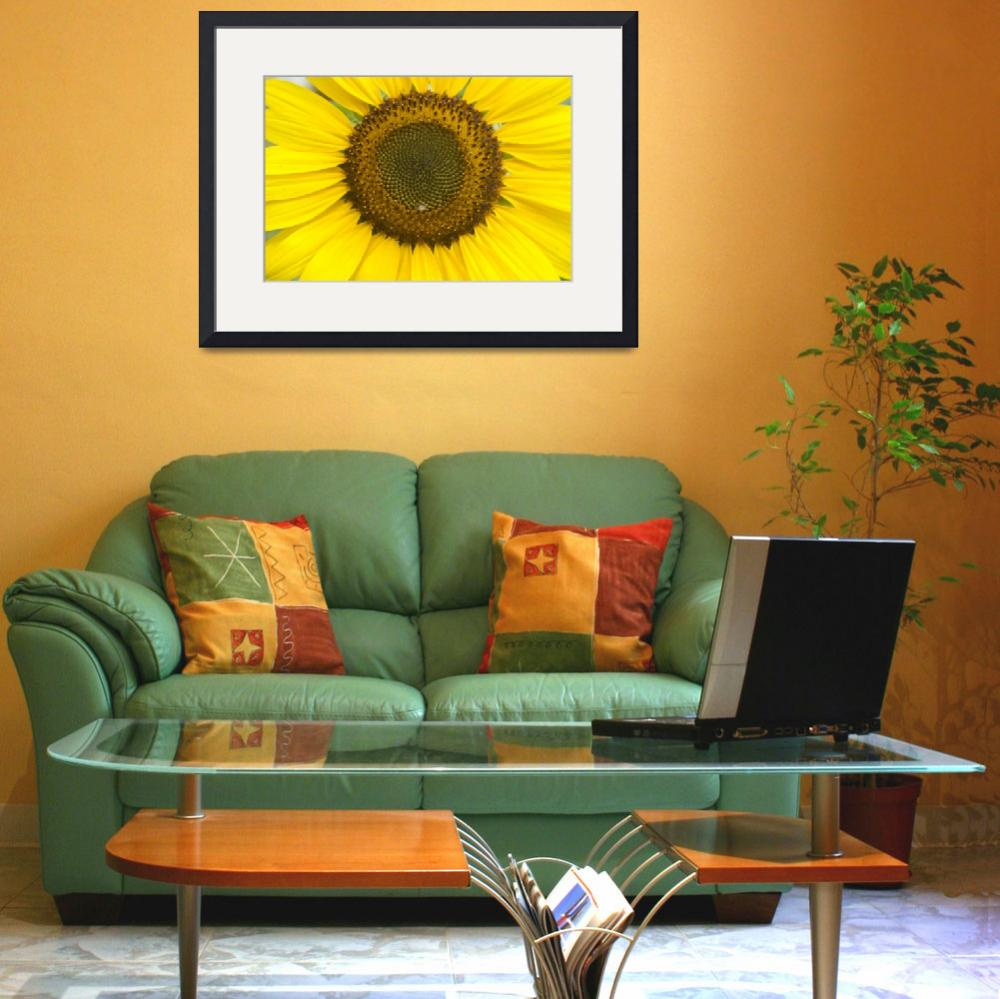 """Sunflower Center&quot  (2011) by lightningman"