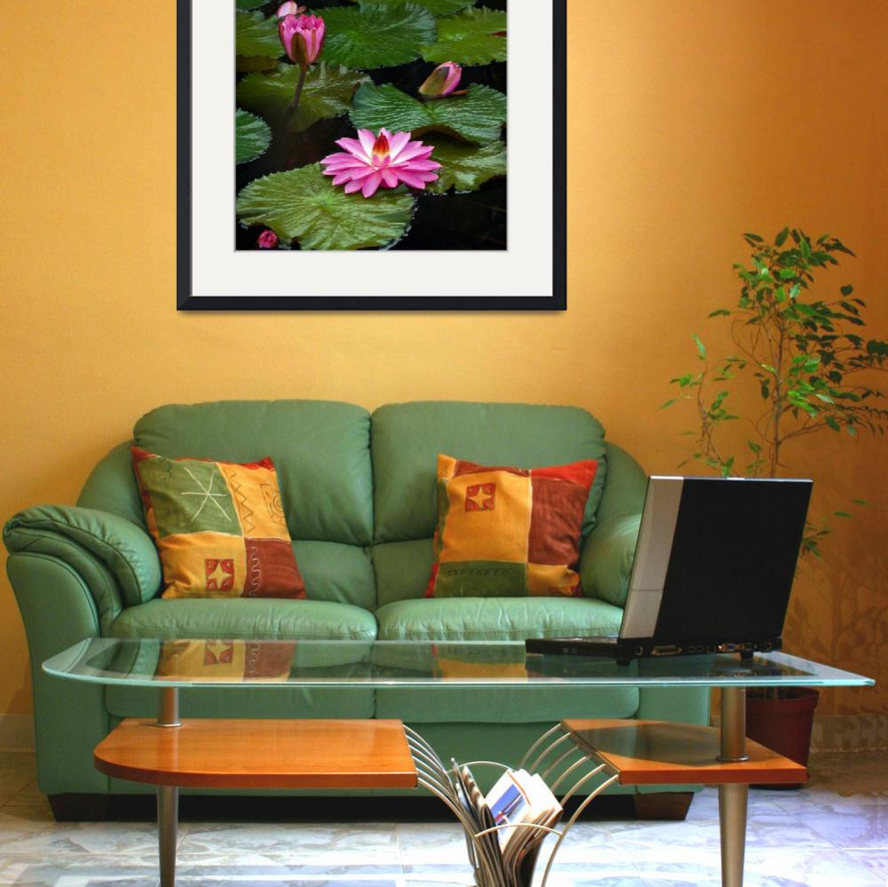 """Hot Pink And Green Tropical Waterlilies&quot  (2013) by LightHeart"