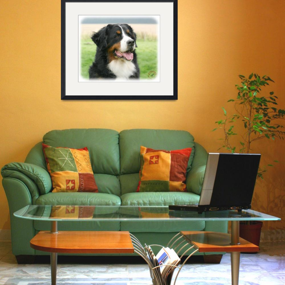 """Bernese Mountain Dog 9Y066D-046&quot  by Traffordphotos"
