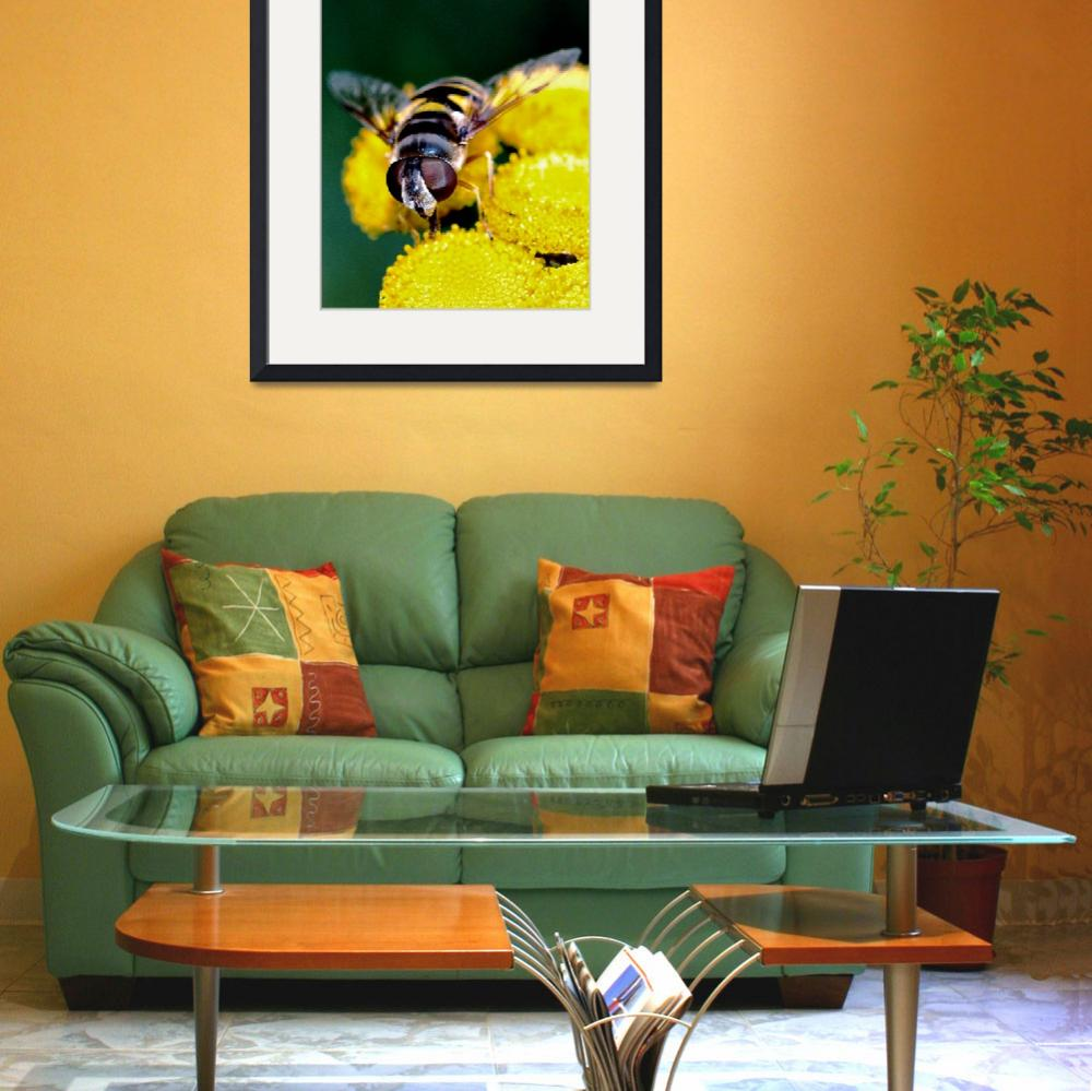 """Hover Fly ll&quot  (2009) by bavosiphotoart"