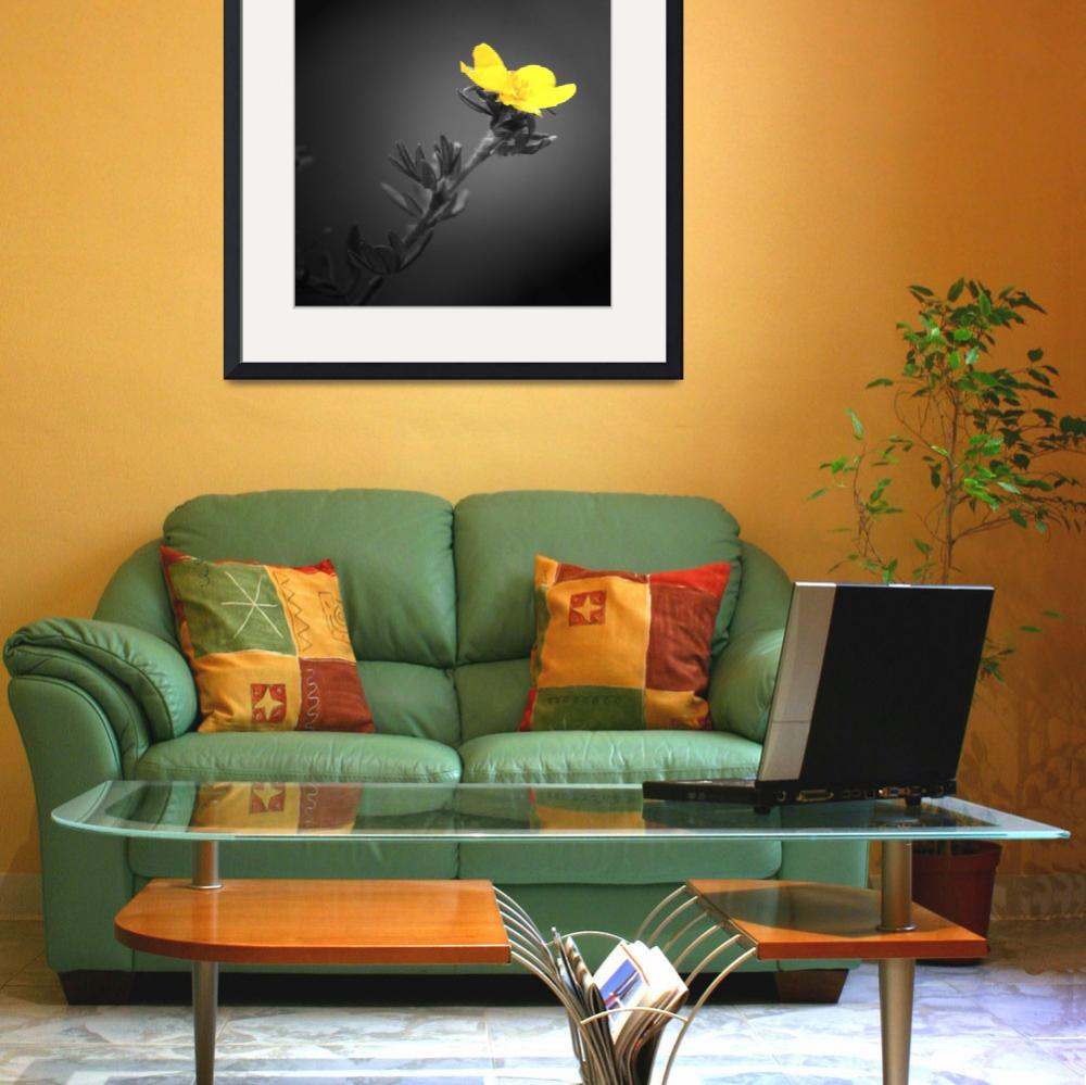 """Yellow Flower&quot  (2009) by Mattfarley"