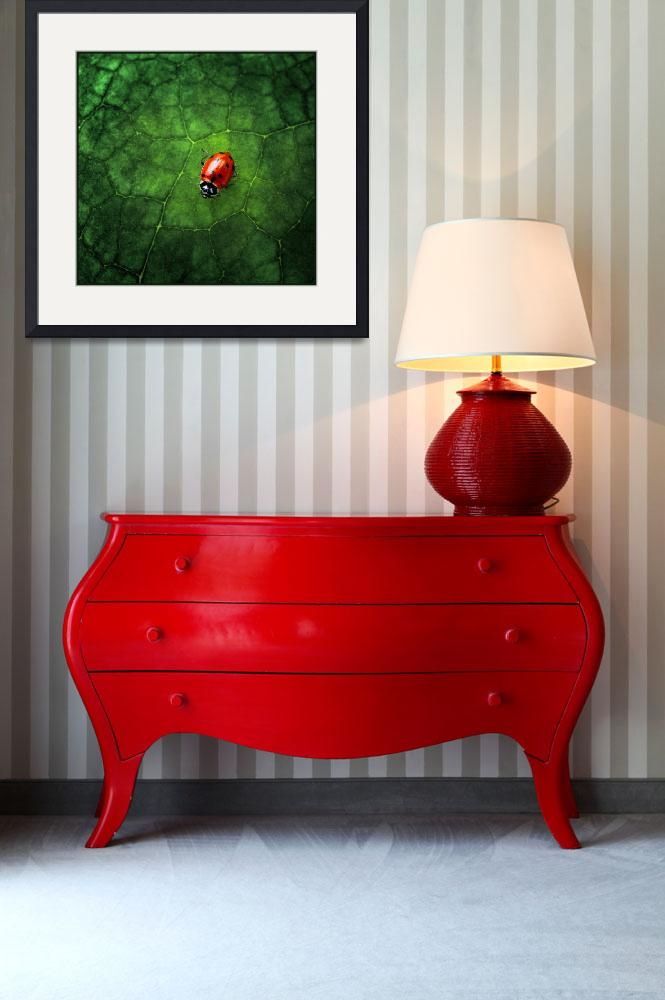 """Ladybug at Home&quot  (2007) by jody9"