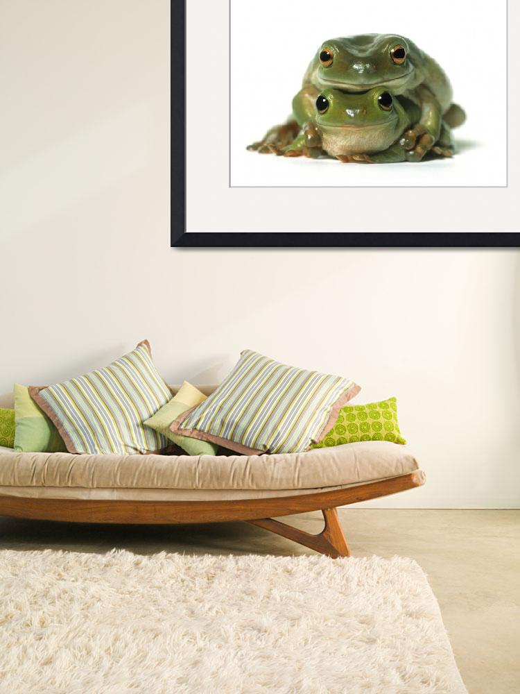 """One Frog On Top Of Another, White Background&quot  by DesignPics"