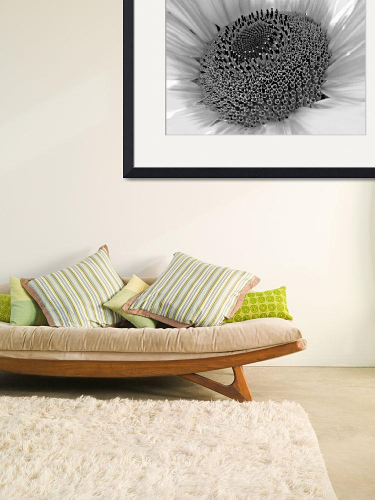 """Sun Flower Center (Black & White)&quot  (2011) by bavosiphotoart"