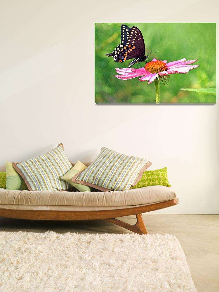 """Butterfly   Black Swallowtail on Flower&quot  (2012) by KsWorldArt"