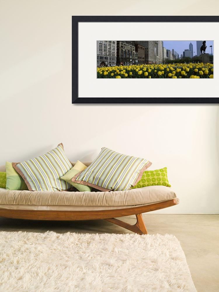 """Tulips along South Michigan Avenue&quot  by Panoramic_Images"