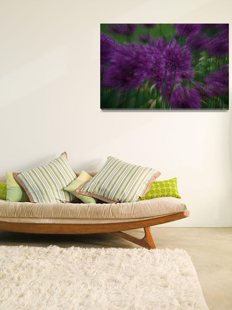 """Allium Giganteum Double&quot  (2011) by kendietz"