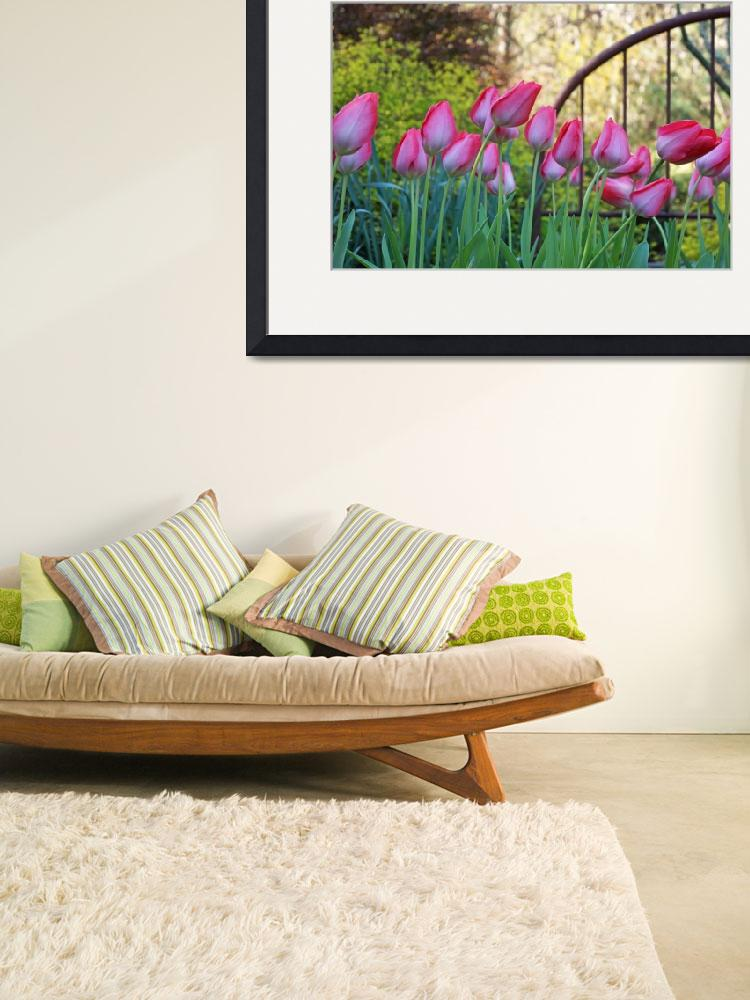 """Pink White Tulips Flowers Garden Art Prints&quot  (2014) by BasleeTroutman"