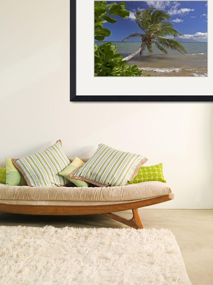 """Hawaii, Molokai, Palm Tree Overhangs The Ocean Wit&quot  by DesignPics"
