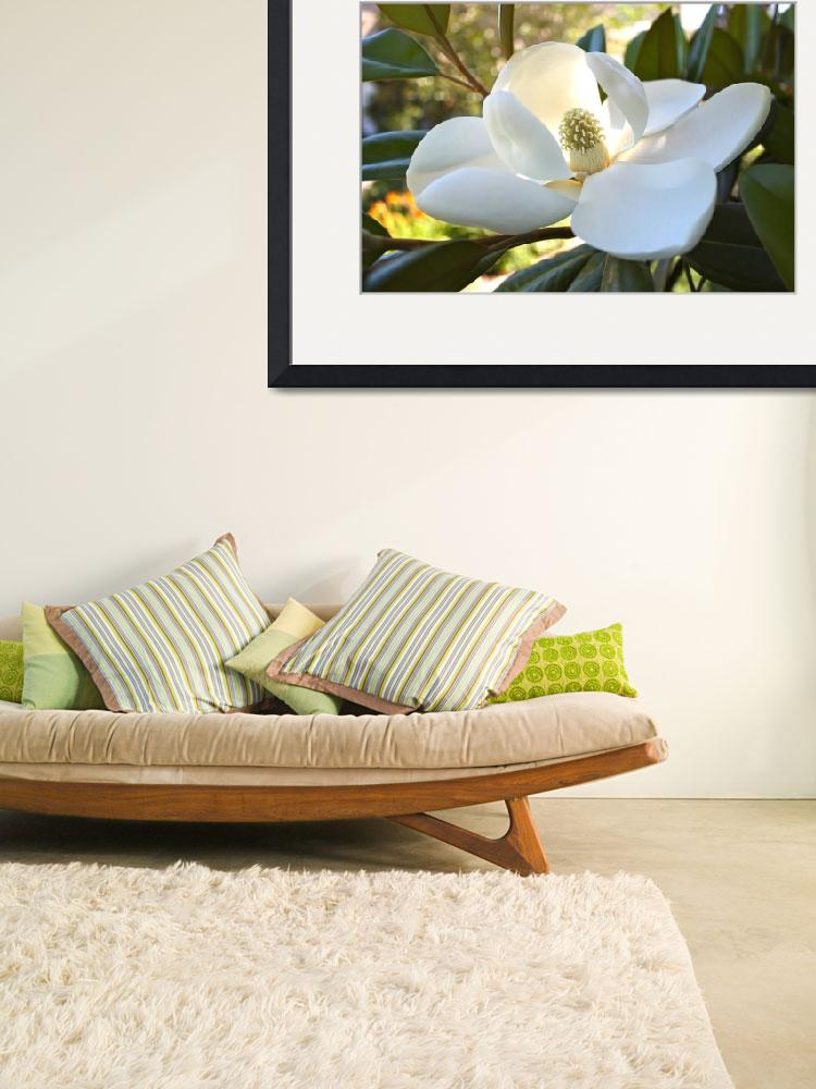 """Sunlit Southern Magnolia&quot  by Groecar"