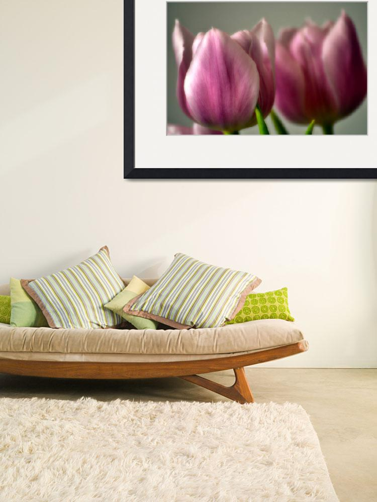 """Pink Tulips&quot  (2012) by LJdesigns"