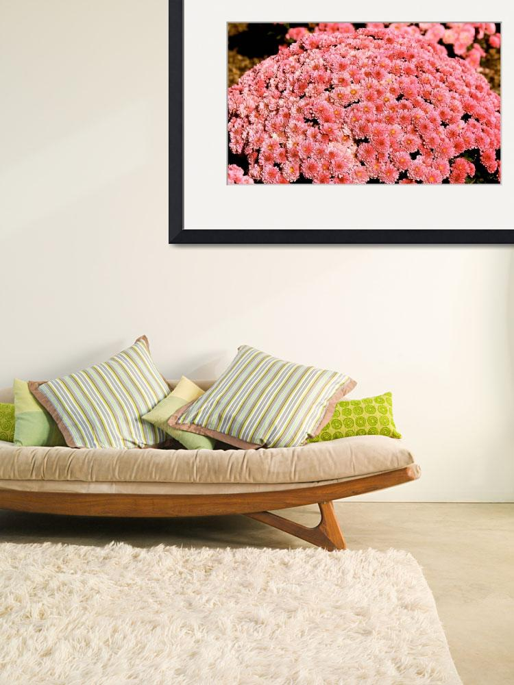 """Cushion Mums 0077&quot  (2009) by rayjacque"
