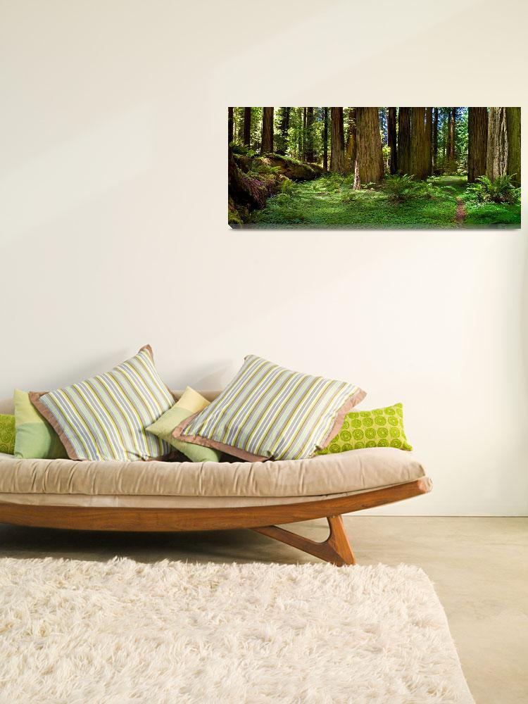 """Redwood Forest Panorama&quot  (2008) by pbk"