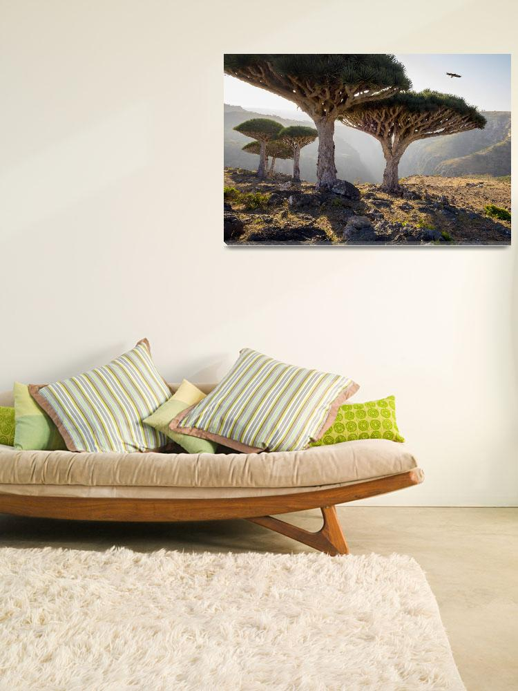 """Dragon-Blood-Trees-Socotra&quot  (2014) by johnlund"