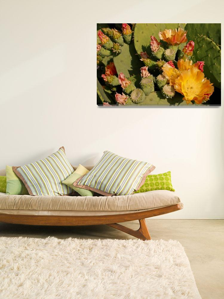 """Cactus in Bloom 1&quot  (2007) by PaulHuchton"