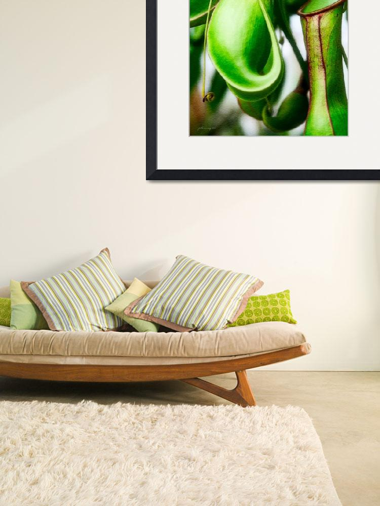 """Tropical Pitcher Plant Nepenthes&quot  (2010) by johncorney"