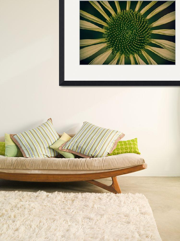 """Green Coneflower&quot  (2016) by ginton"